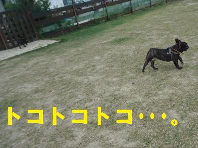 DSC02248_convert_20130122204425.jpg