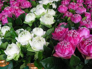 細工したハスの花