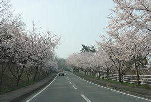画像 142桜