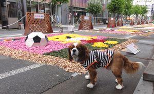 画像 137花キャンバス