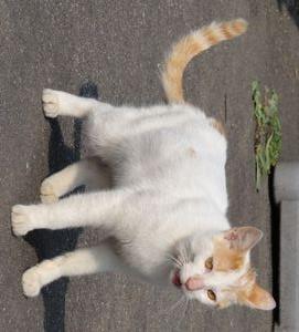 画像 148外猫