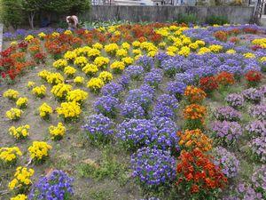 画像 141花壇1
