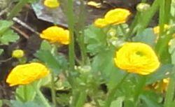 画像 136黄色花