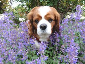 画像 141紫花