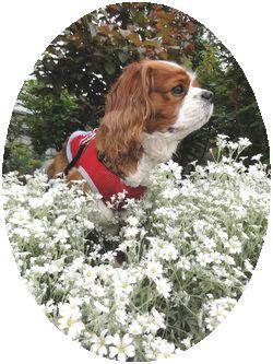 画像 143白花