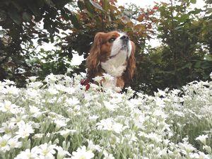 画像 142白花