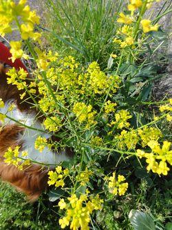 画像 143黄色花