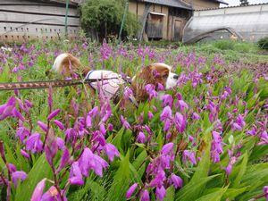 画像 139紫蘭