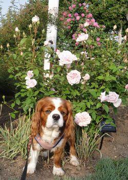 画像 148バラ花壇