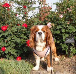 画像 150バラ花壇