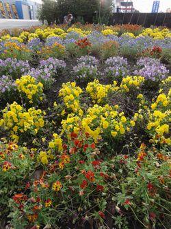 画像 155花壇