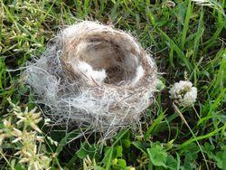 画像 144鳥の巣