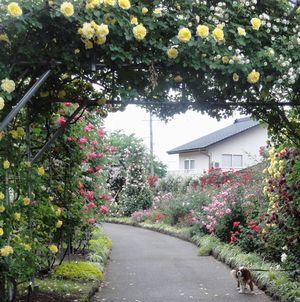 画像 139花壇