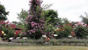 画像 159花壇