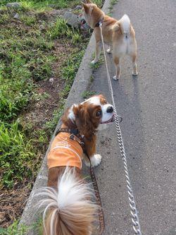 002散歩2