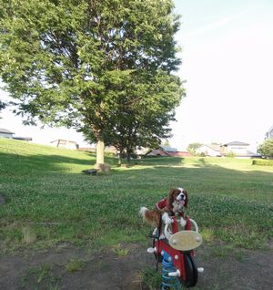 003バイク