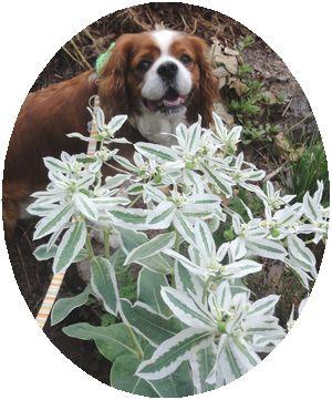 006白い花