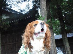 002神社
