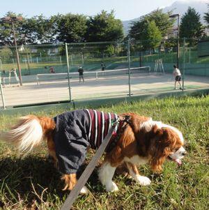 005テニス