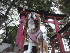 002神社1