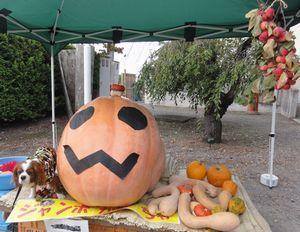 004ジャンボかぼちゃ