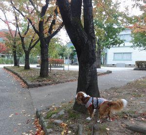 003バラ公園