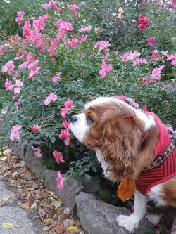 005バラ花壇