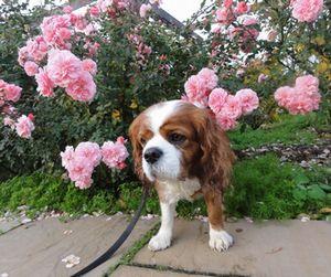 003バラ花壇
