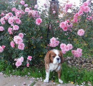 006バラ花壇