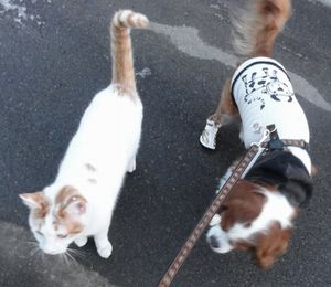 003散歩3