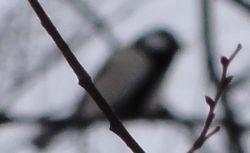 011小鳥1