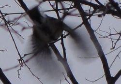 014小鳥2