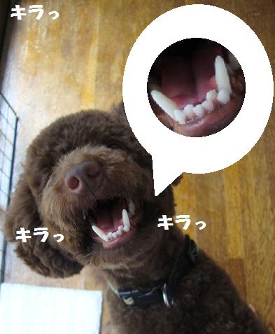 歯がきれい