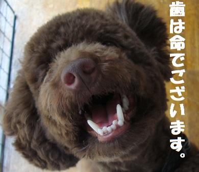きれいな歯1 - コピー