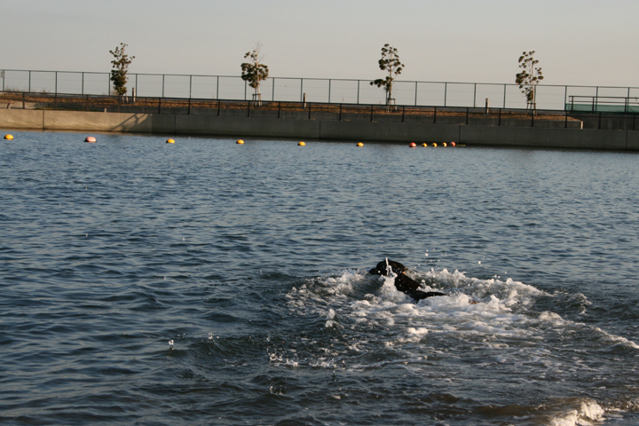 swim01.jpg