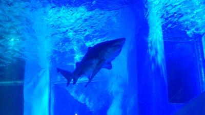 サメ…でかいな。