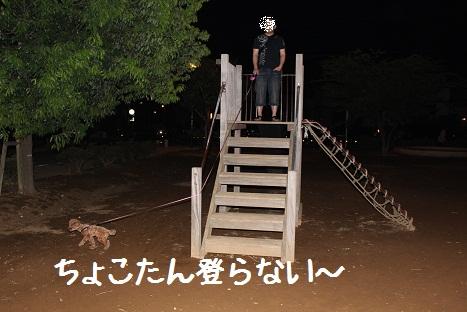 おさんぽ5