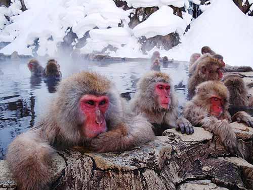20121026_001_monkey_02.jpg
