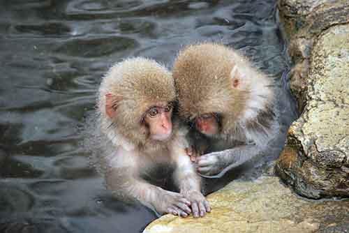 20121026_001_monkey_03.jpg