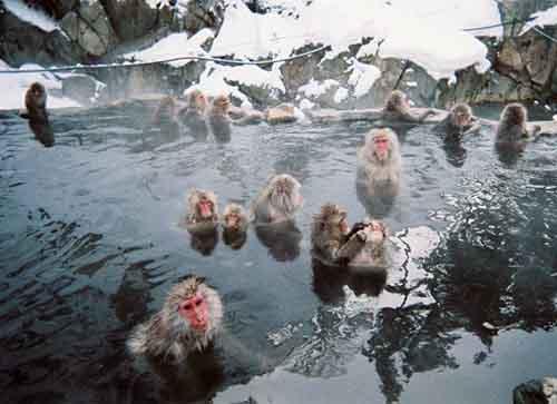 20121026_001_monkey_04.jpg