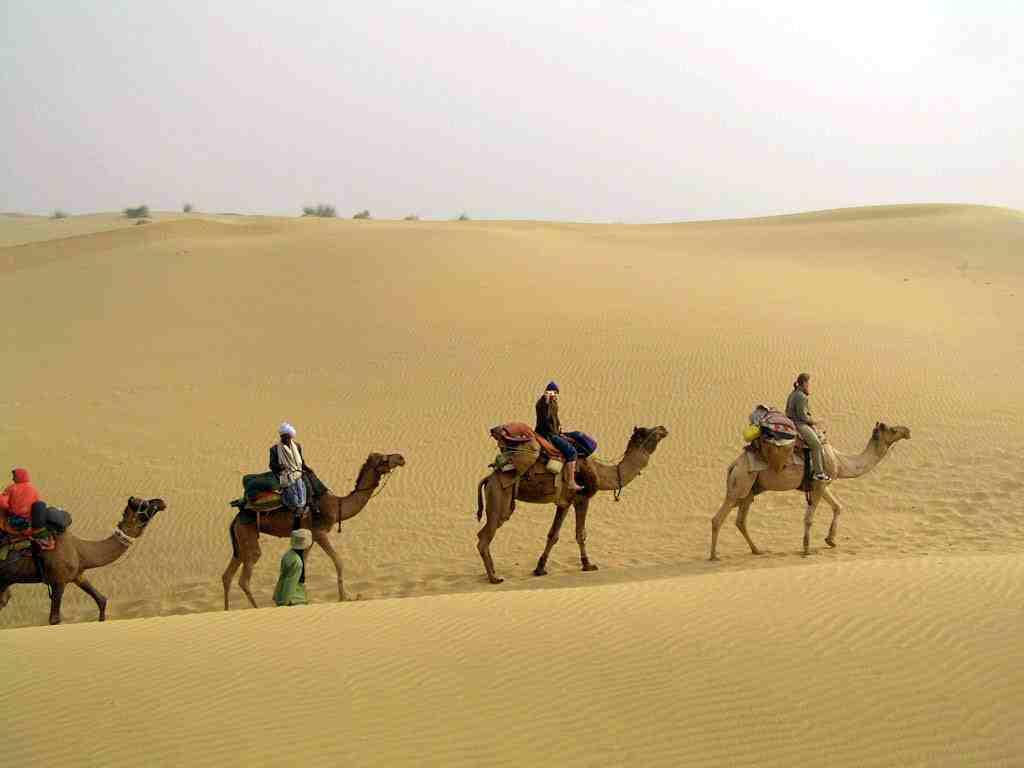 B6 camel