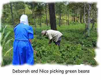 Newsletter-2014-Sep-04-Green-beans.jpg