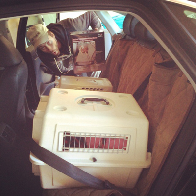 backseatcover.jpg