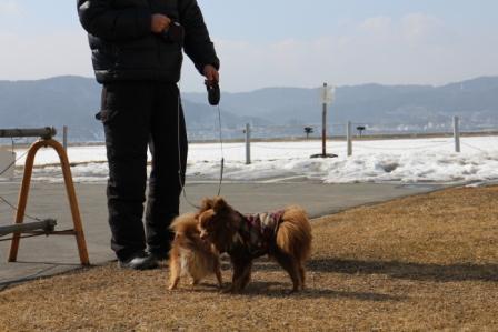 20130305諏訪湖1
