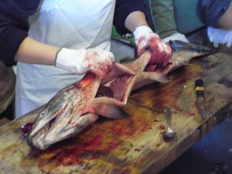 村上塩引き鮭