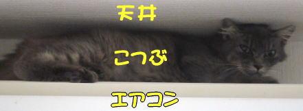 kotsubu