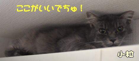 kotusubu