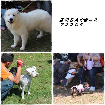 20121007広川
