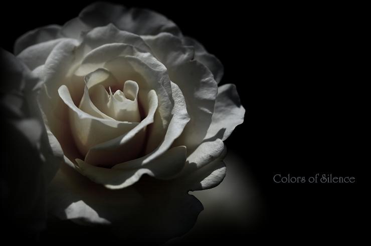 1-rose faint