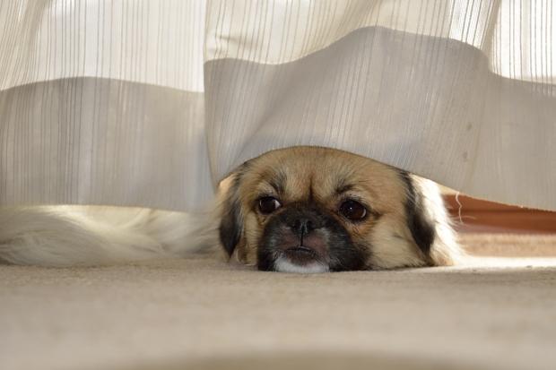 ⑥窓辺でお昼寝